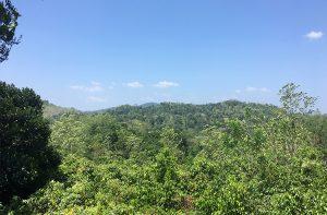 Cinnamon and Tea plantation
