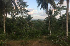 Mixed Plantation With Sea Views