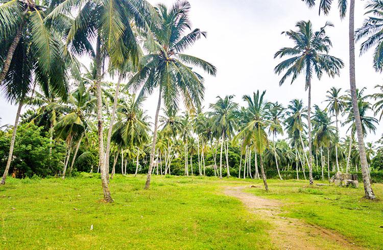 development-land-in-famous-ahangama-001