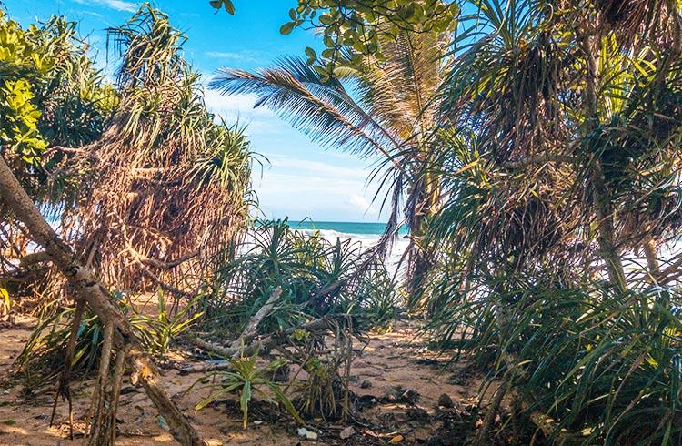 gorgeous-beachfront-land-001