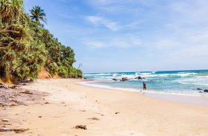 70-perches-on-the-purplish-dikwella-beach-001