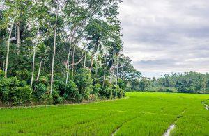 mesmerizing-rice-paddyfront-land-003