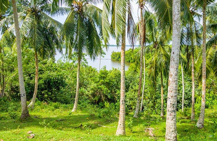 verdant-two-acres-overlooking-the-maduganga-001