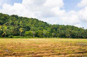 perfect-rice-paddyfront-plot-002