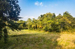 paddy-island-in-ahangama-001