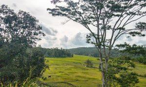 peerless-plantation-with-gorgeous-views-001